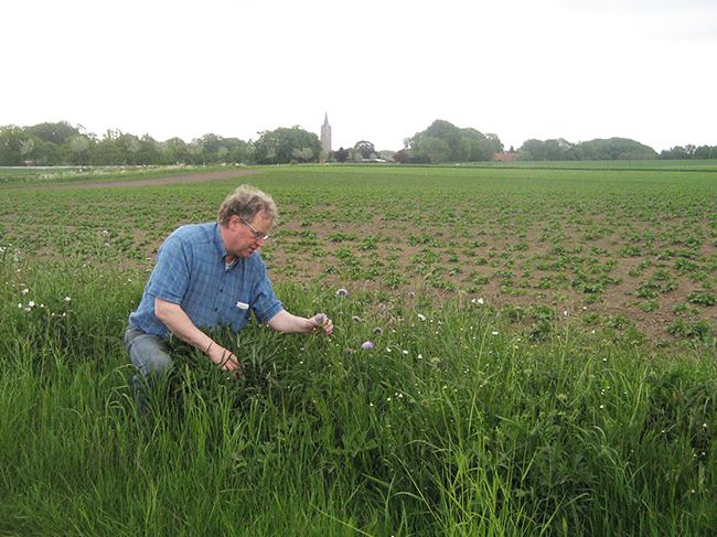 Ankums Bürgermeister Detert Brummer-Bange freut sich mit jedem Jahr mehr über die Vielfalt der Natur, die sich auf diesem Streifen am Rand der Kartoffelackers entwickelt.